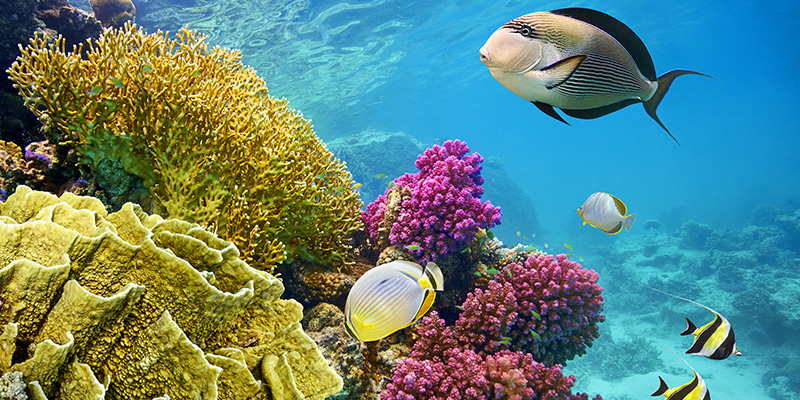 How Know Your Sunscreen Killing Coral Reefs