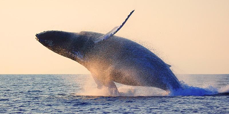 Whale Watching Villa Del Palmar Puerto Vallarta