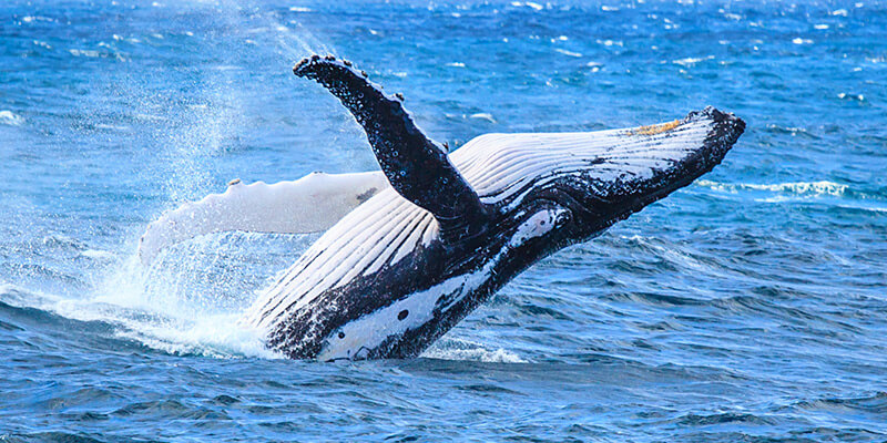 Villa Del Arco Cabo San Lucas Whale Watching