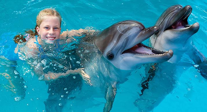 Nadar Con Delfines O Leones Marinos